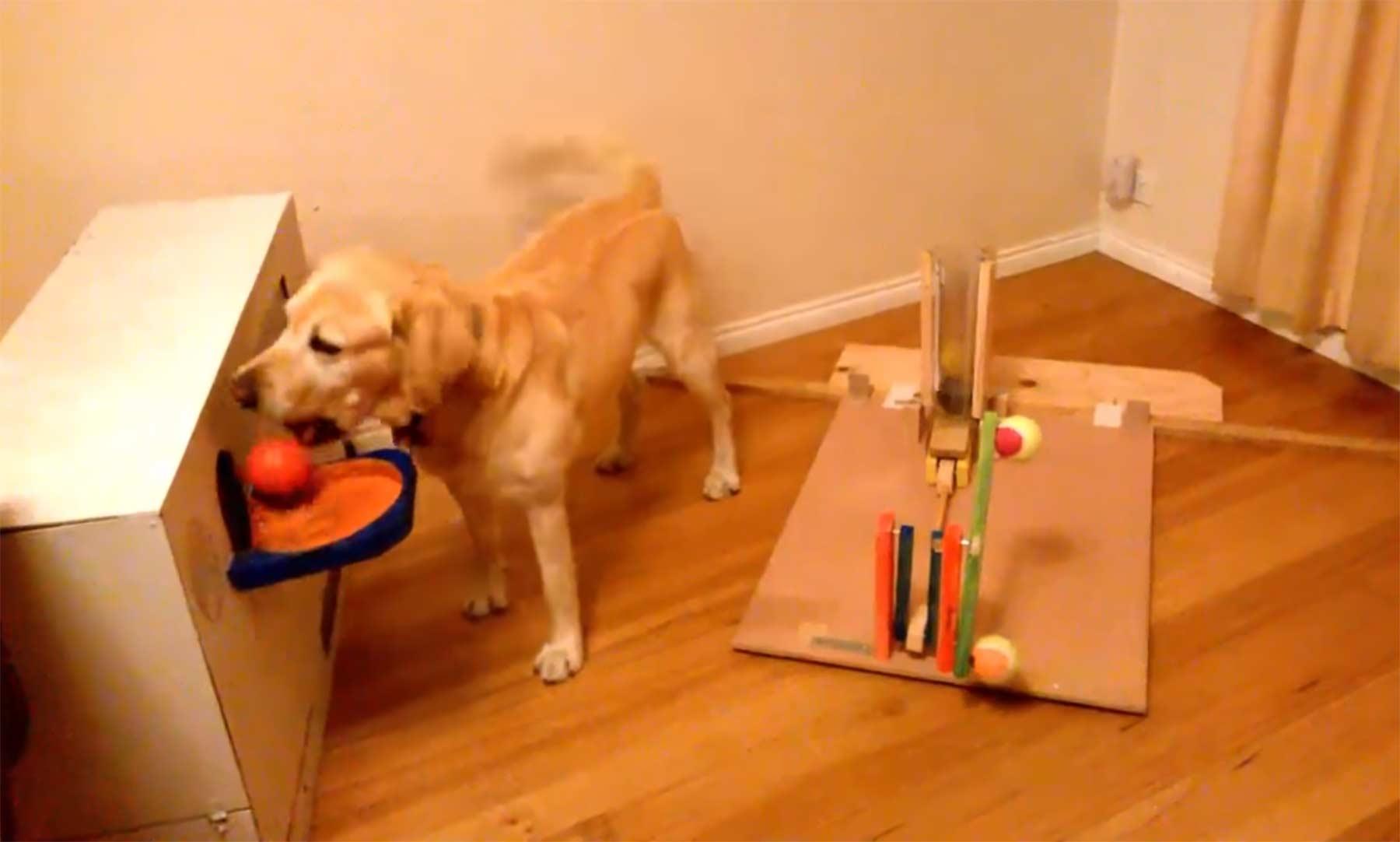 Leckerli-Automat für den smarten Hund