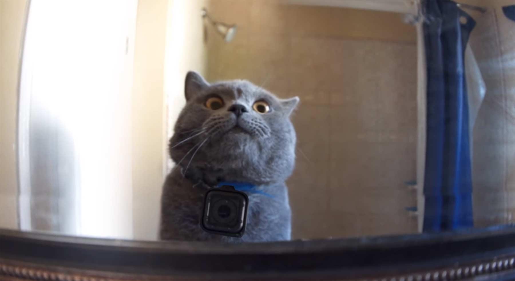 GoPro-Kamera an einer Zuhause allein gelassenen Katze