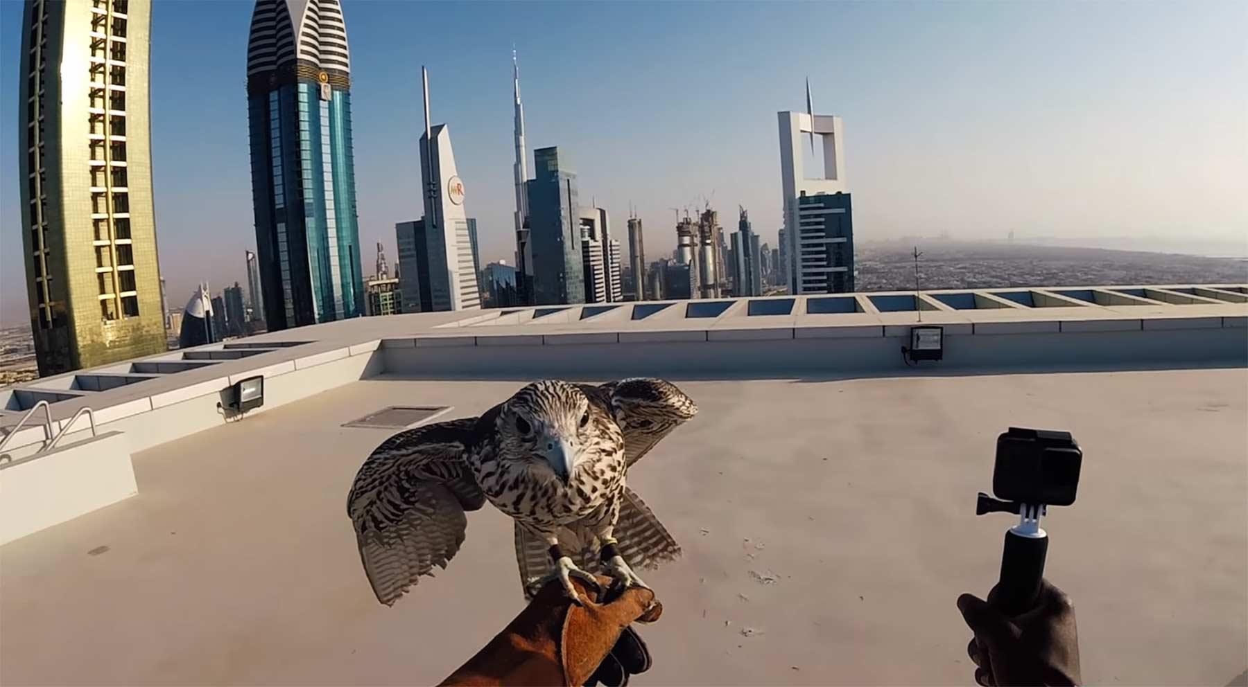 Nigel Sylvester – GO! 4 | Dubai