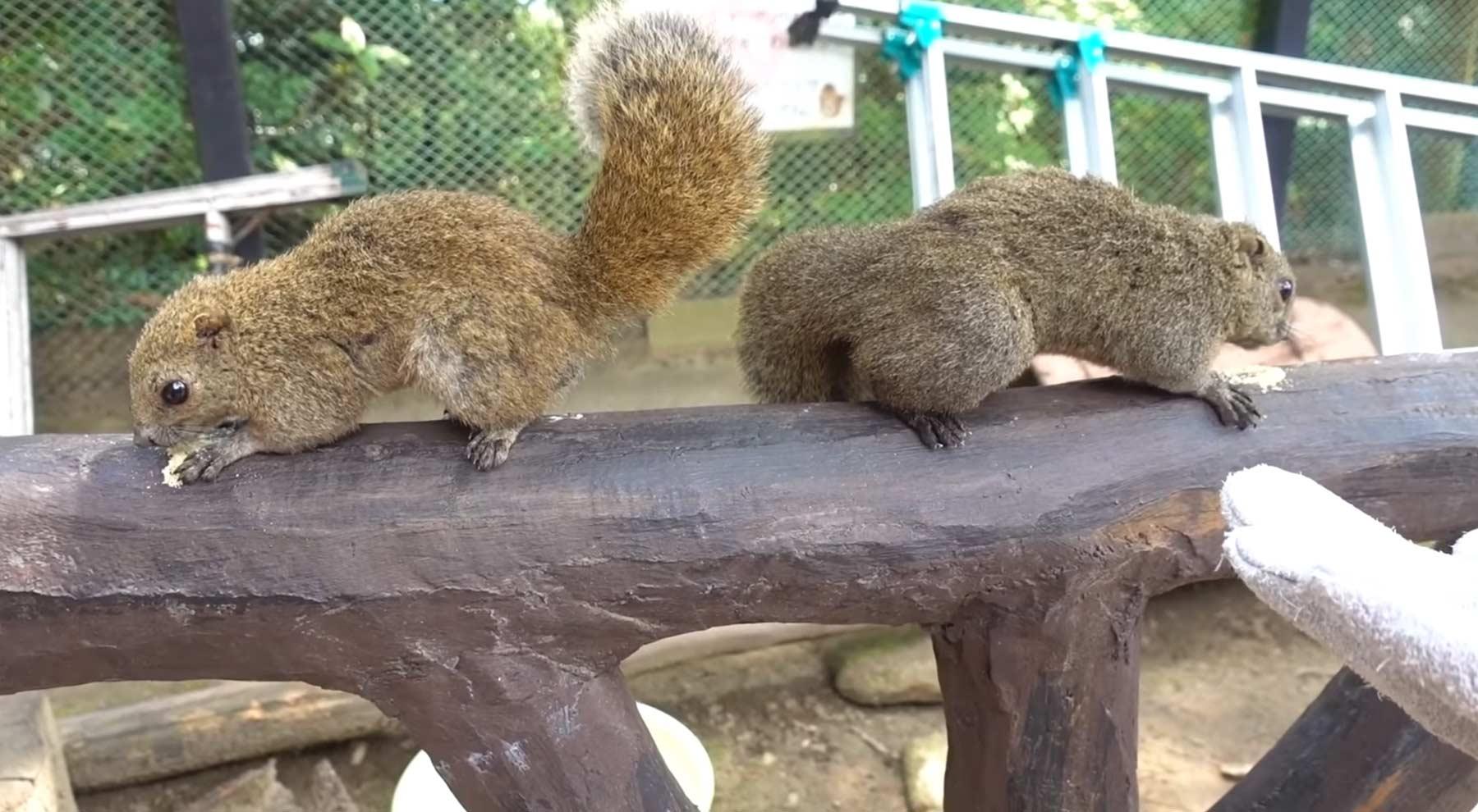 Zu Besuch im japanischen Eichhörnchen-Park squirrel-park