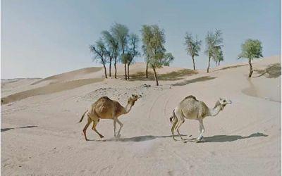 Frau traut sich nicht raus und bereist mit Street View die Welt