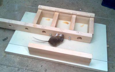 Wie klein kann ein Loch sein, damit eine Maus noch durchpasst?