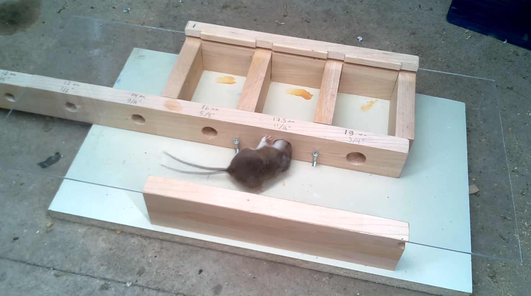 wie klein kann ein loch sein damit eine maus noch durchpasst. Black Bedroom Furniture Sets. Home Design Ideas