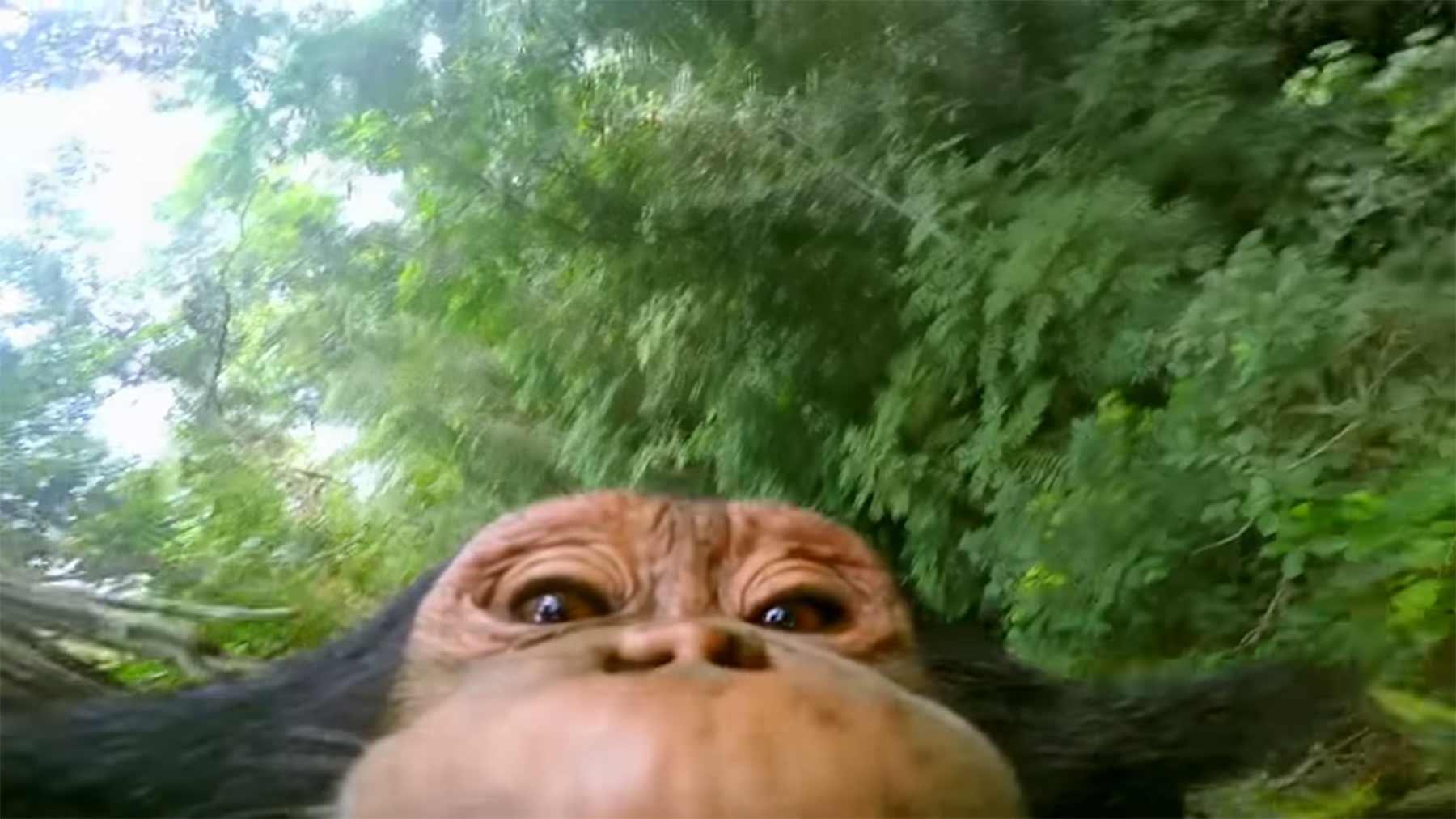 Schimpanse klettert mit GoPro-Kamera