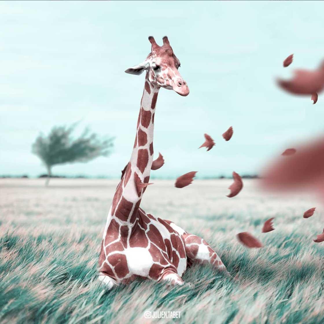 Ausgefallene Photoshop-Tiere Julien-Tabet_08