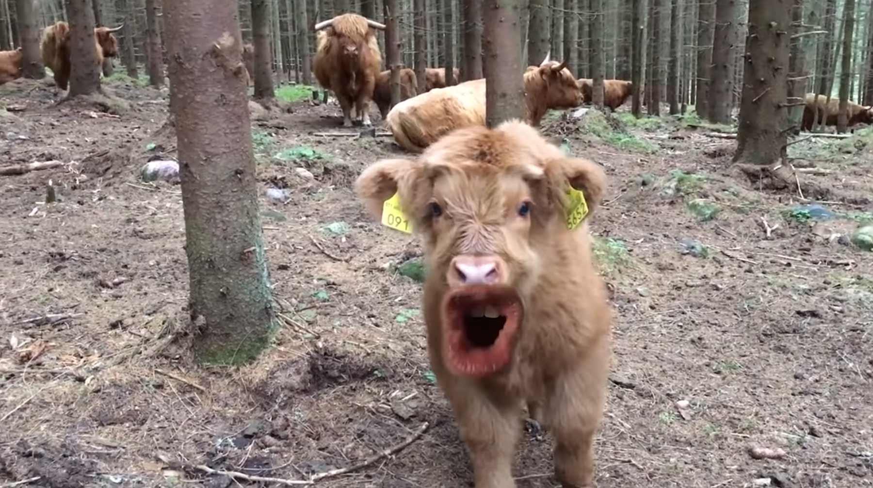 Wenn Kühe reden könnten
