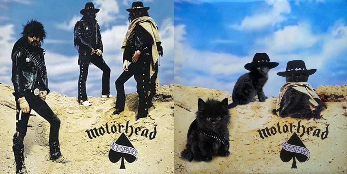 Albencover mit Katzen nachgestellt the-kitten-covers_Alfra-Martini_01