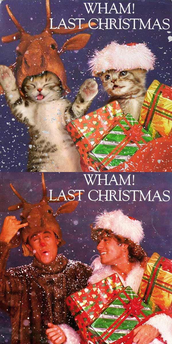 Albencover mit Katzen nachgestellt the-kitten-covers_Alfra-Martini_02