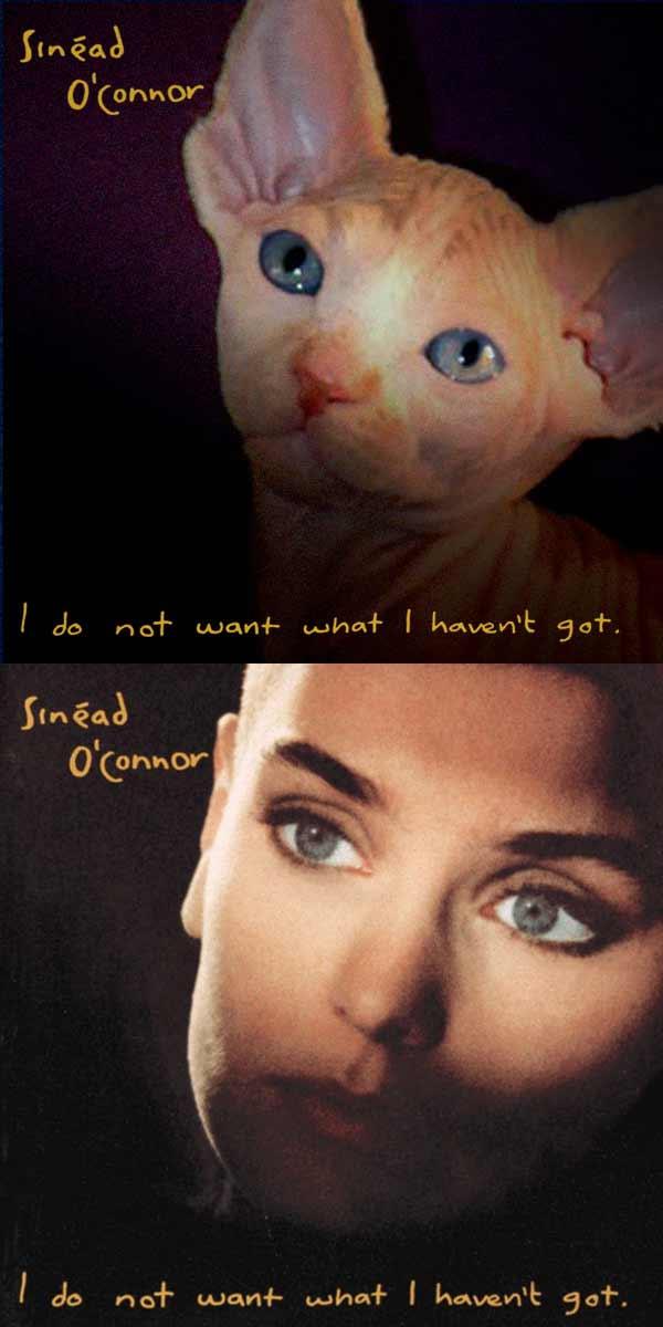 Albencover mit Katzen nachgestellt the-kitten-covers_Alfra-Martini_08