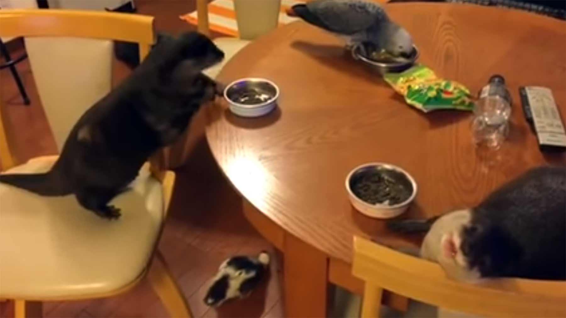Nur zwei Otter, ein Papagei und eine Ente beim gemeinsamen Frühstück