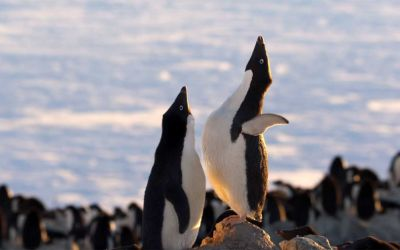 """Trailer zur Tierdokumentation """"Penguins"""""""