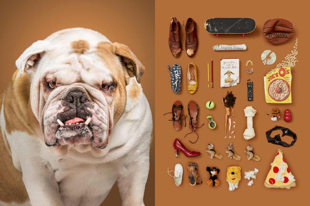 Hunde und ihre liebsten Sachen