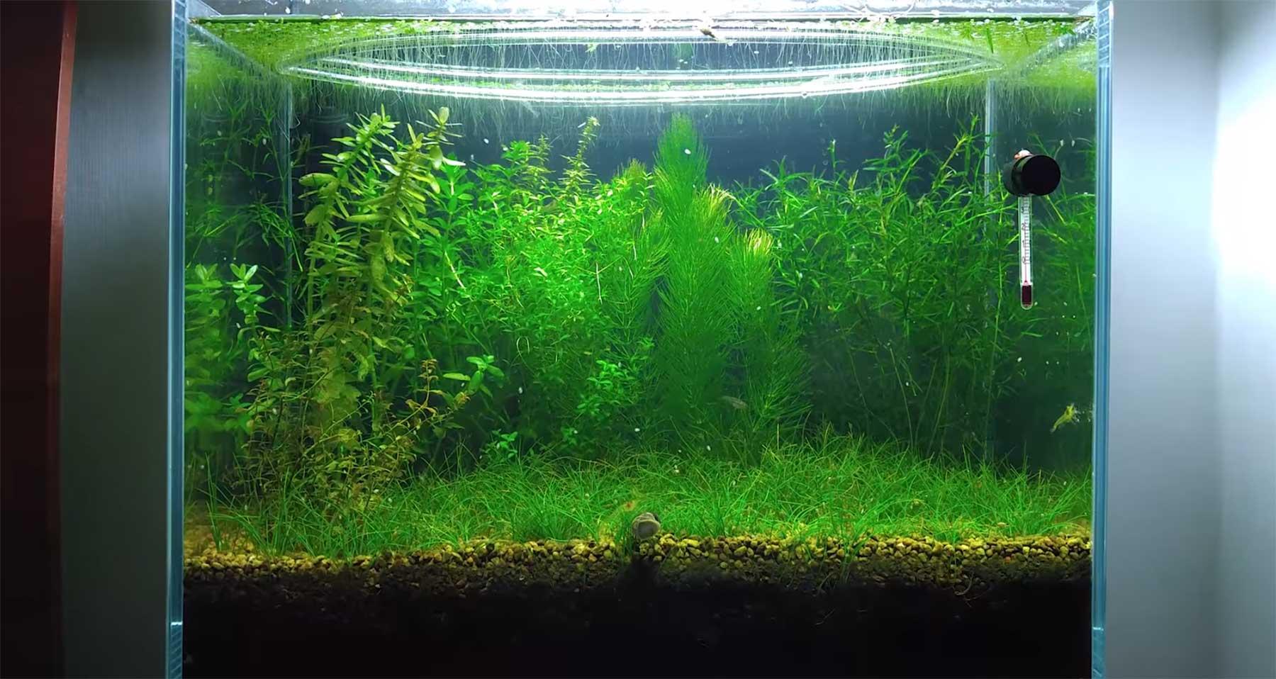 Aquarium sechs Monate ohne Pumpe und Filter stehen lassen