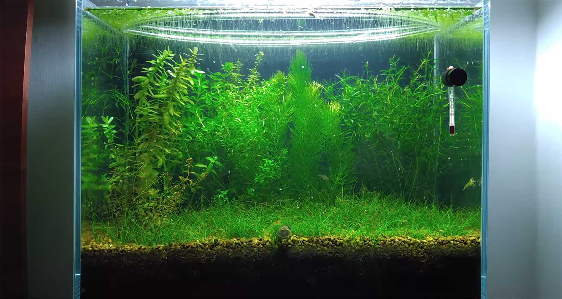 Aquarium sechs Monate ohne Pumpe und Filter stehen lassen Aquarium-Walstad-Methode