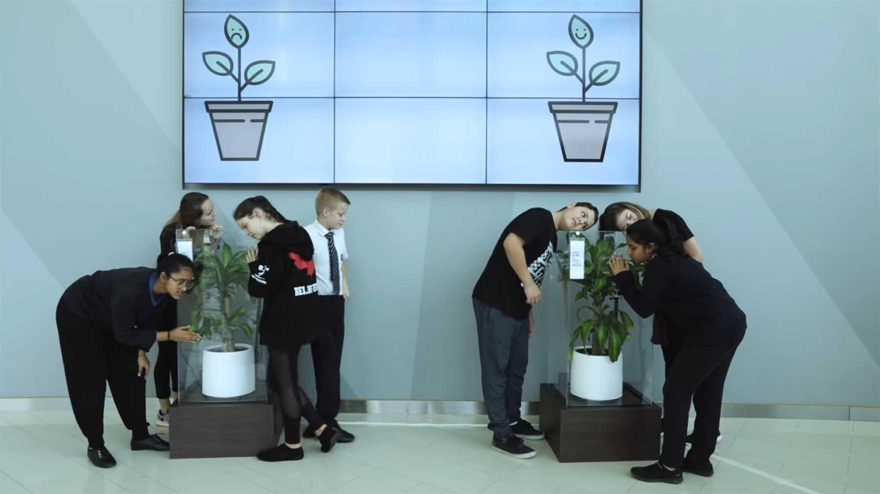 Was passiert, wenn man eine Pflanze 30 Tage lang mobbt? pflanze-mobben-experiment