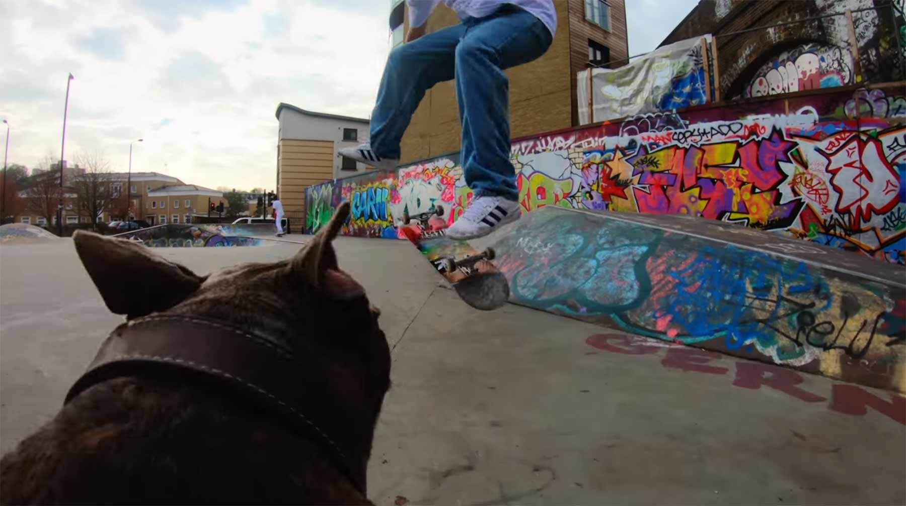Hund als Verfolgungskamera im Skate-Park hund-pov-kamera-im-skatepark