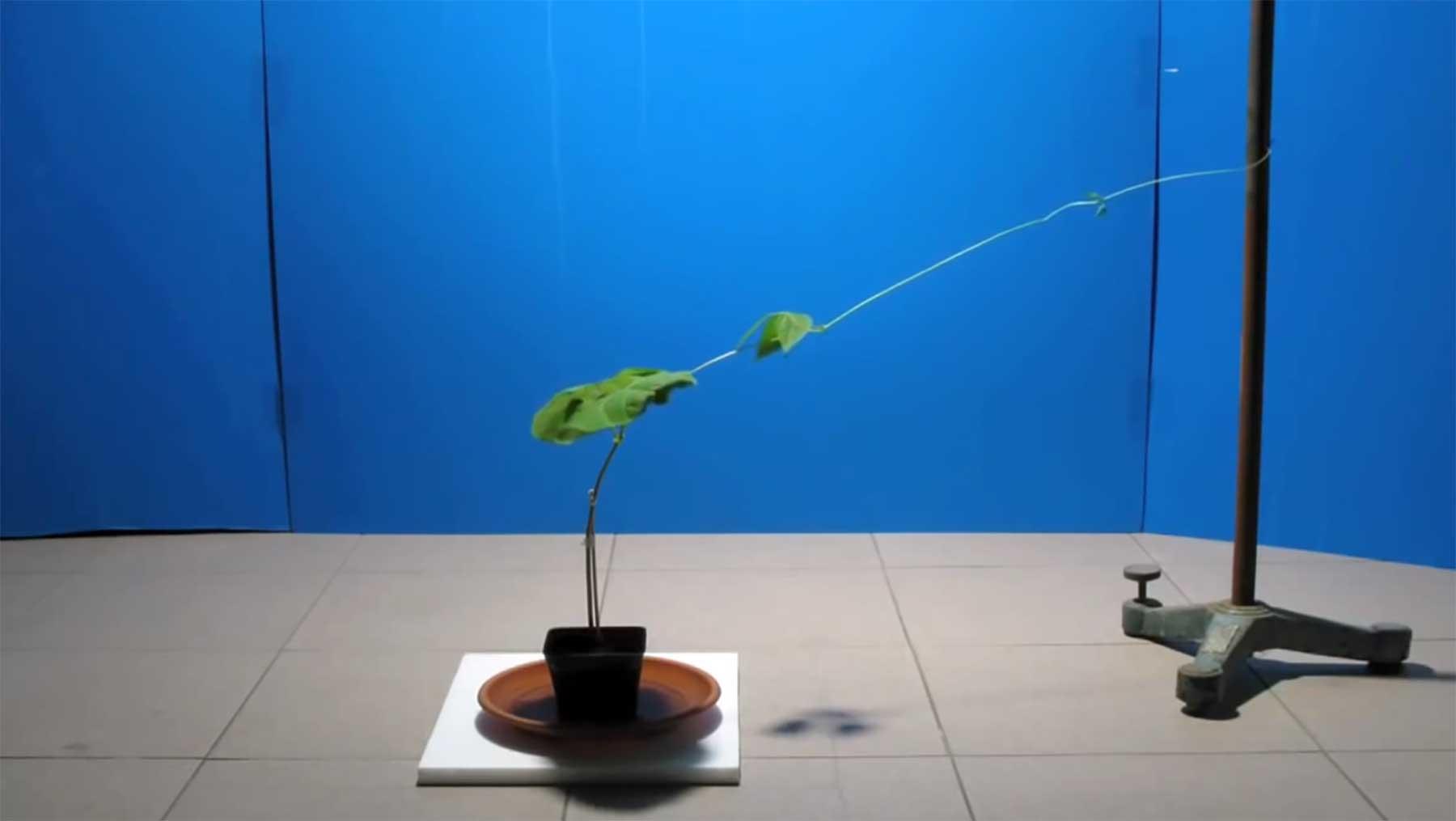 Die wissenschaftliche Untersuchung des Verhaltens von Pflanzen