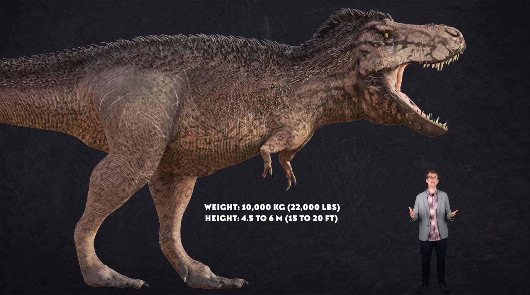 Wieso hatte der Tyrannosaurus Rex so kleine Stummel-Ärmchen?
