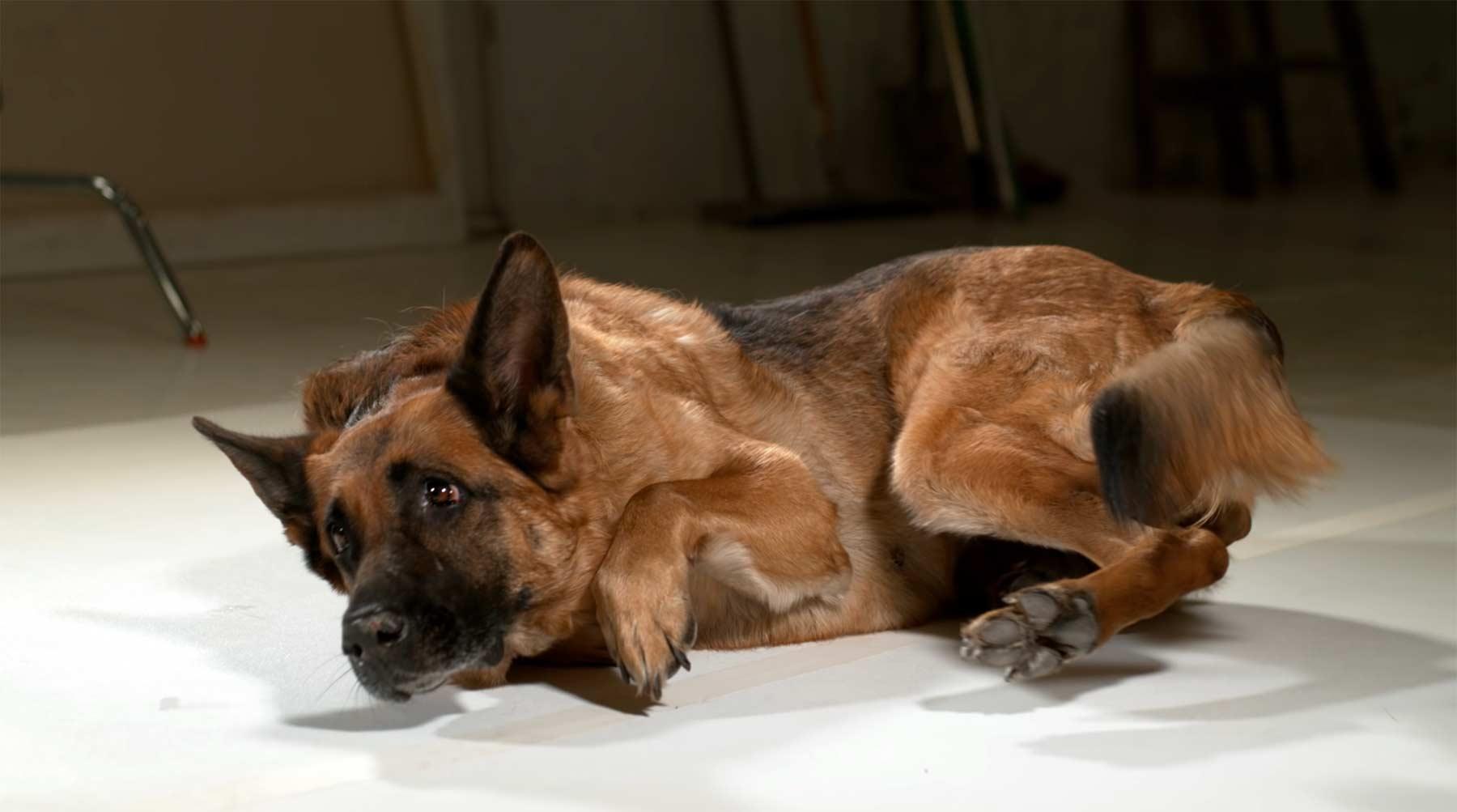 Wie Hunde superschnell aufstehen können