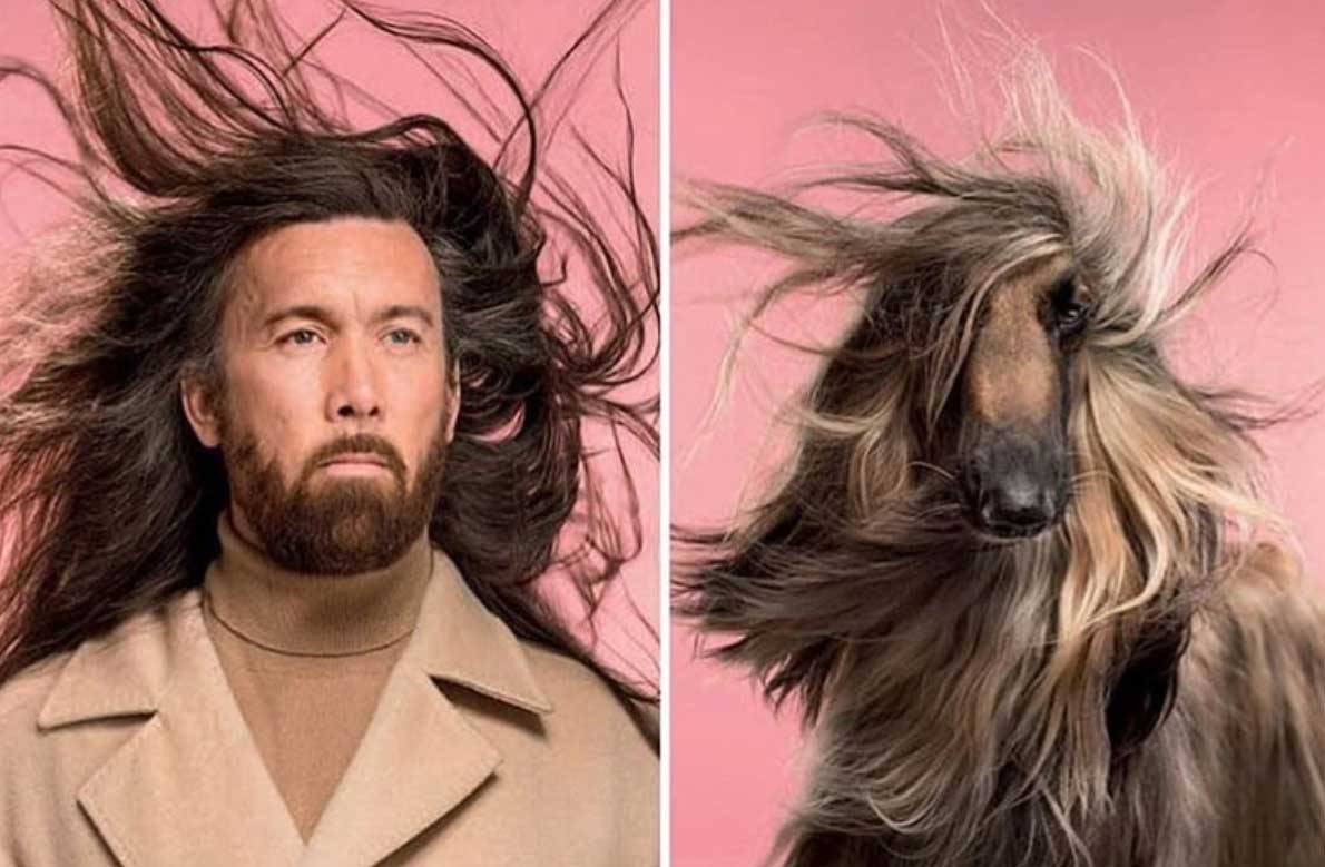 Die Ähnlichkeit zwischen Hunden und ihren Haltern