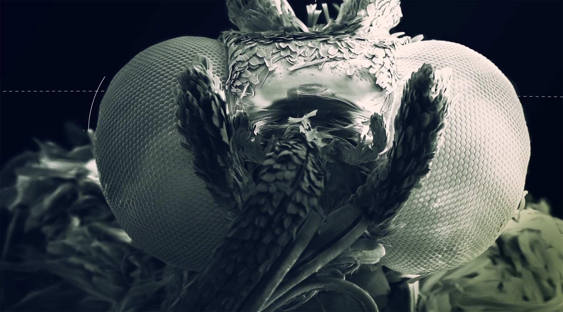 Ein Schmetterling unterm Rasterelektronenmikroskop makro-schmetterling