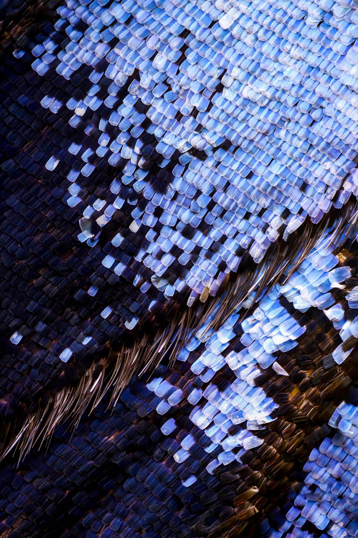 Supernahaufnehmen von Schmetterlingsflügeln Chris-Perani-schmetterlingsfluegel-makro_01