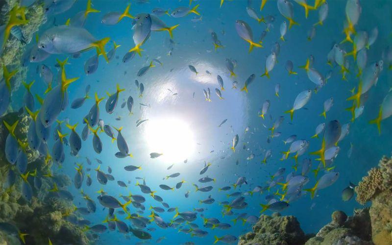Ein Tauchgang durch das Great Barrier Reef