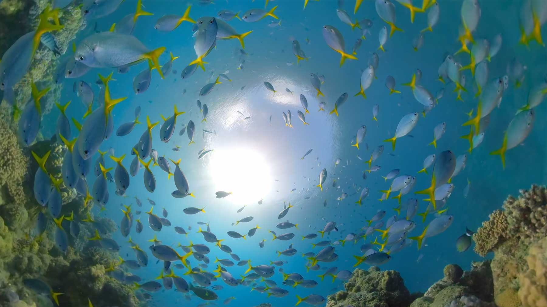 Ein Tauchgang durch das Great Barrier Reef Great-Barrier-Reef-tauchen-gopro
