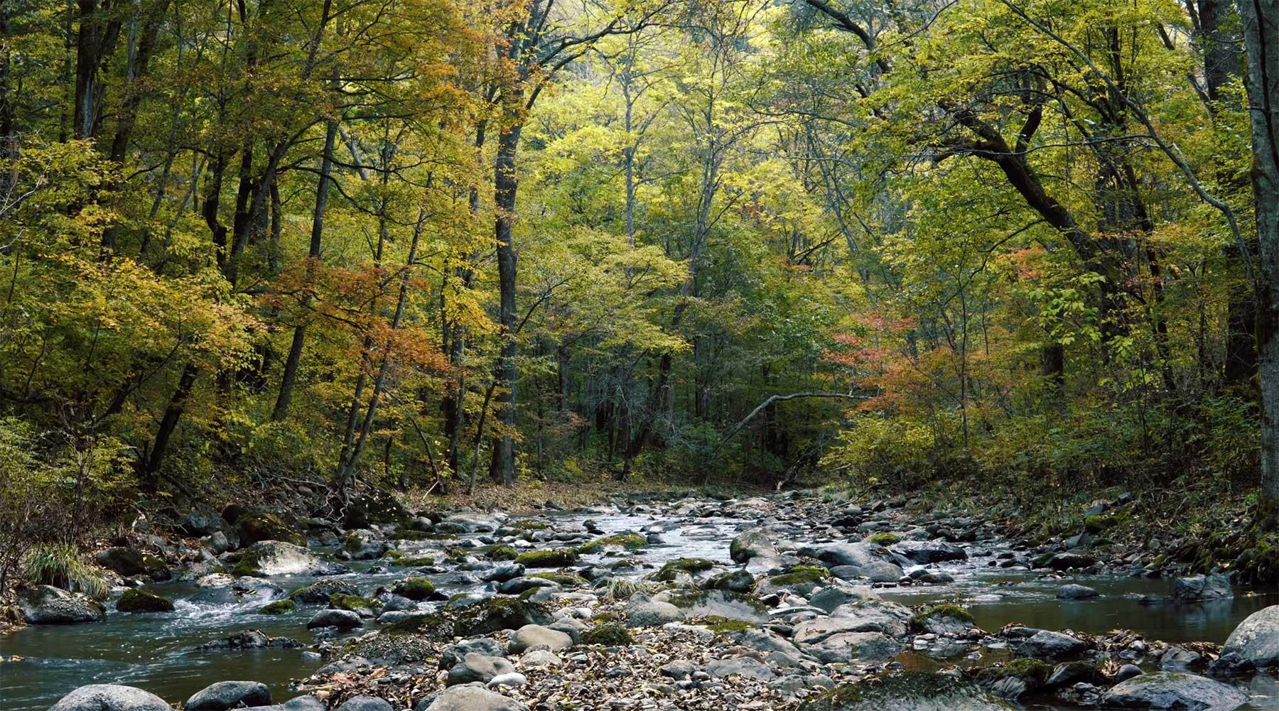 Eine Stunde entspanntes Waldfluss-Plätschern