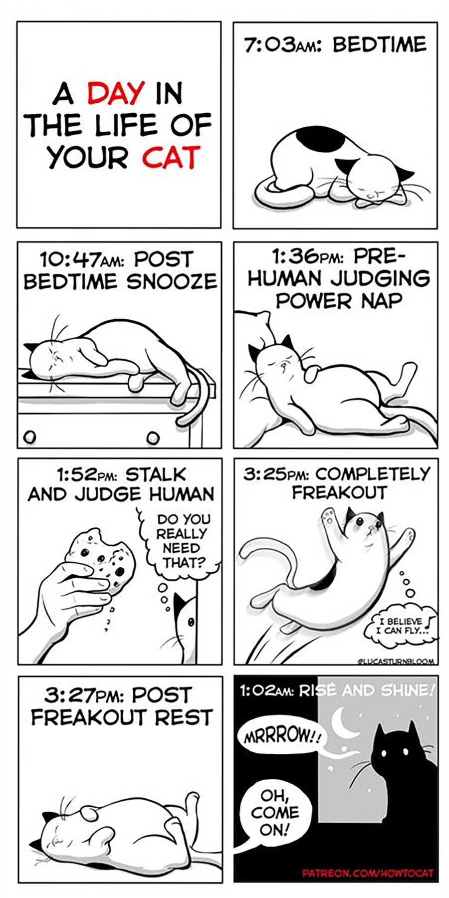 Das Leben mit einer Katze im Comic how-to-cat-Lucas-Turnbloom_05