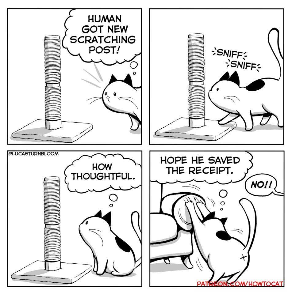 Das Leben mit einer Katze im Comic how-to-cat-Lucas-Turnbloom_06