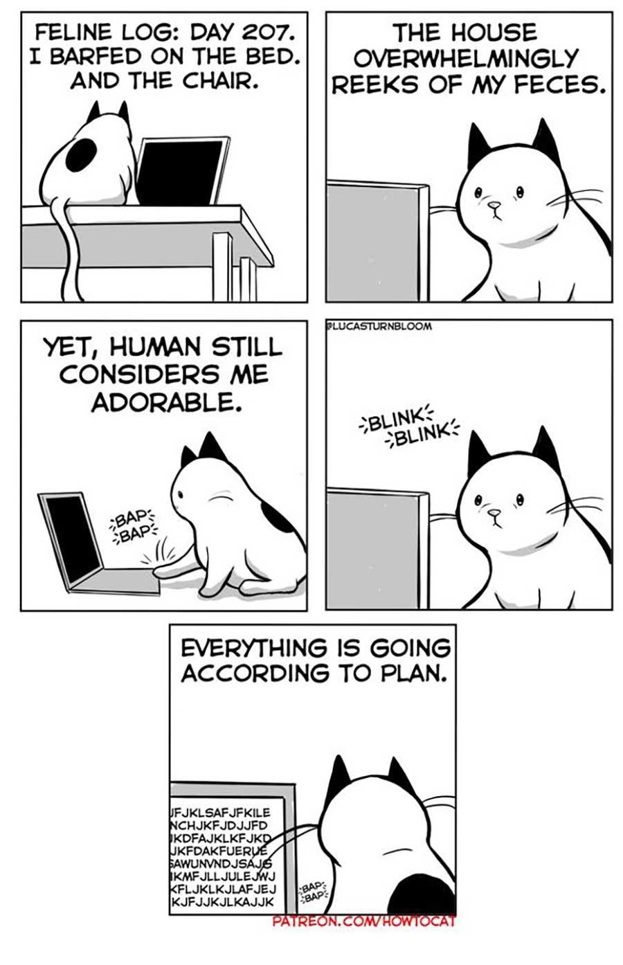 Das Leben mit einer Katze im Comic how-to-cat-Lucas-Turnbloom_08