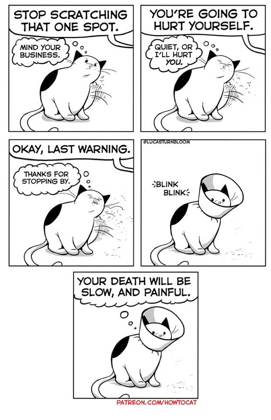 Das Leben mit einer Katze im Comic how-to-cat-Lucas-Turnbloom_10