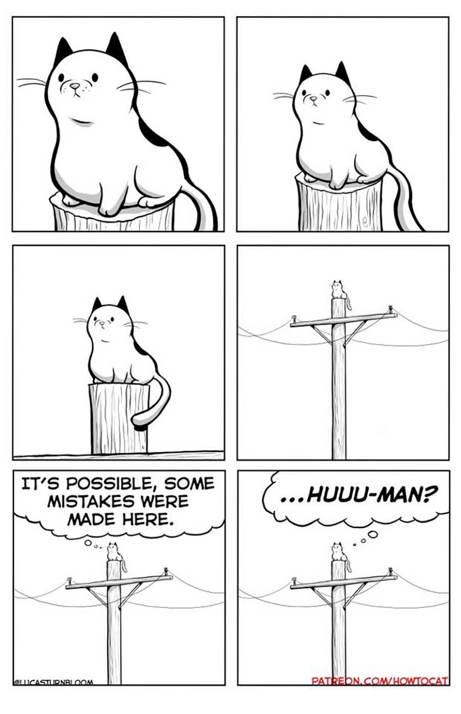 Das Leben mit einer Katze im Comic how-to-cat-Lucas-Turnbloom_12