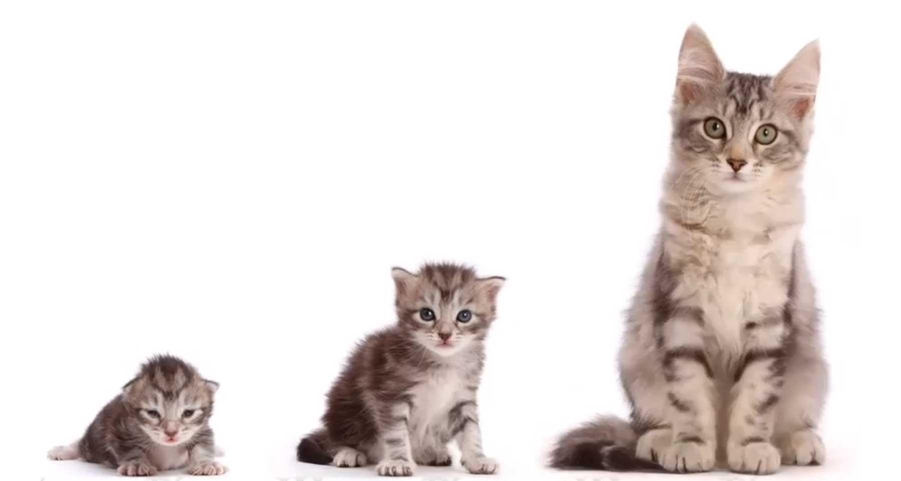 Einer Katze beim Wachsen zuschauen
