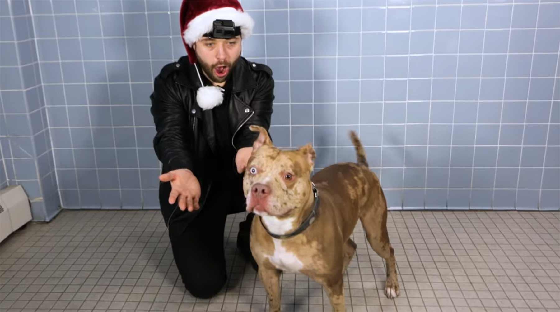 Zaubertricks für Hunde aus dem Tierheim zaubertricks-hunde-reaktion