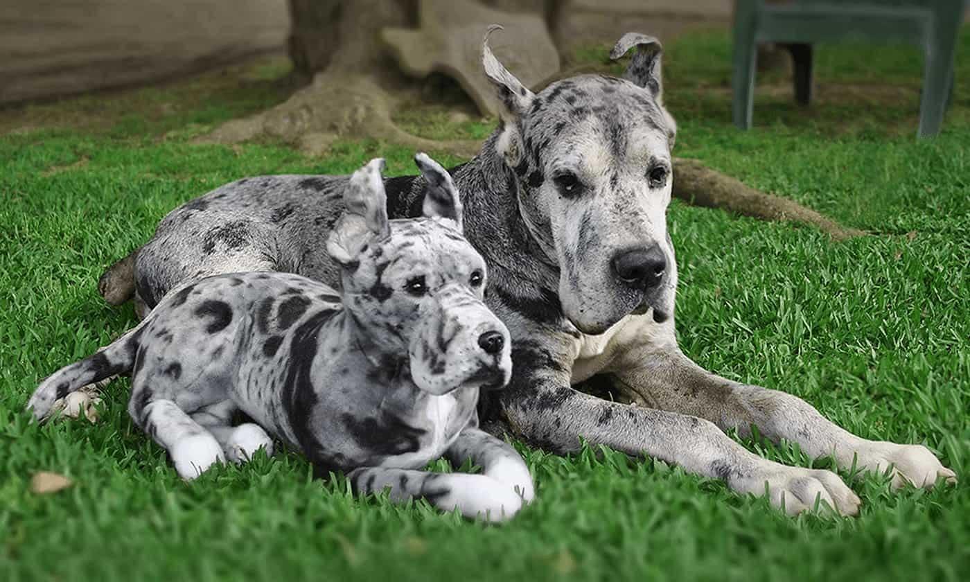 Schlappen in Form des eigenen Haustieres cuddle-clones_07
