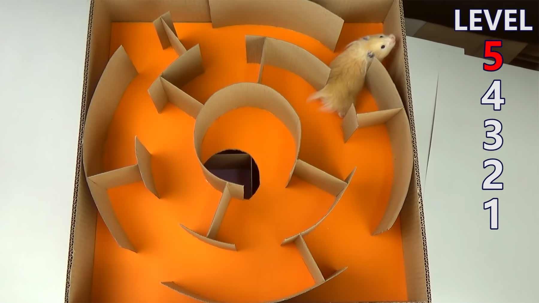 DIY-Hamsterlabyrinth auf fünf Stockwerken