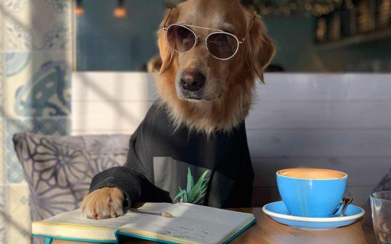 Fotografin Ursula Daphne Aitchison ist auf den Hund gekommen