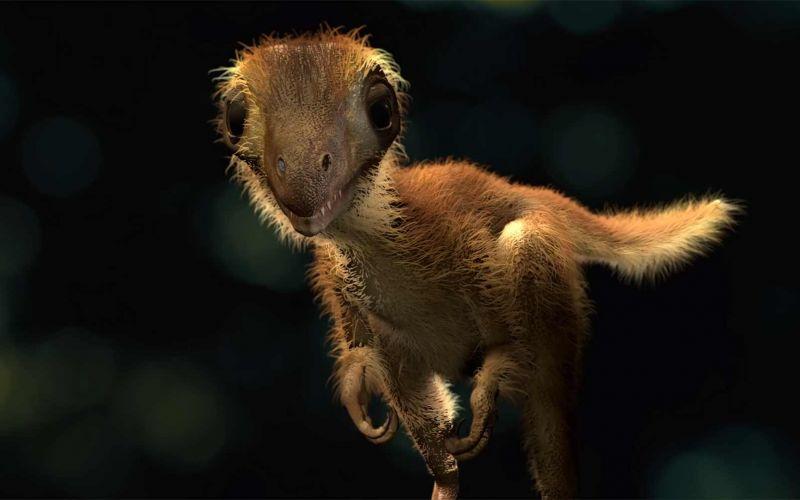 Wie sahen eigentlich Baby-Tyrannosaurus Rex aus?