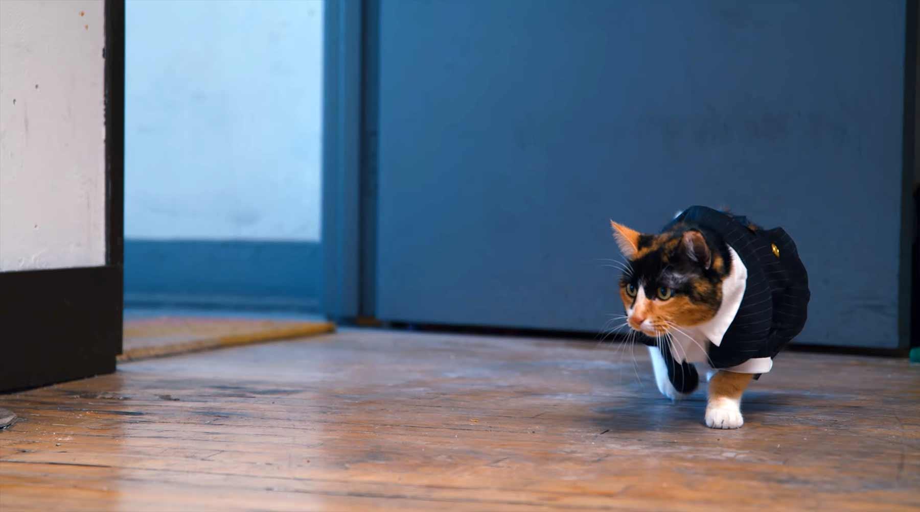 Secret Service Cat secret-service-cat