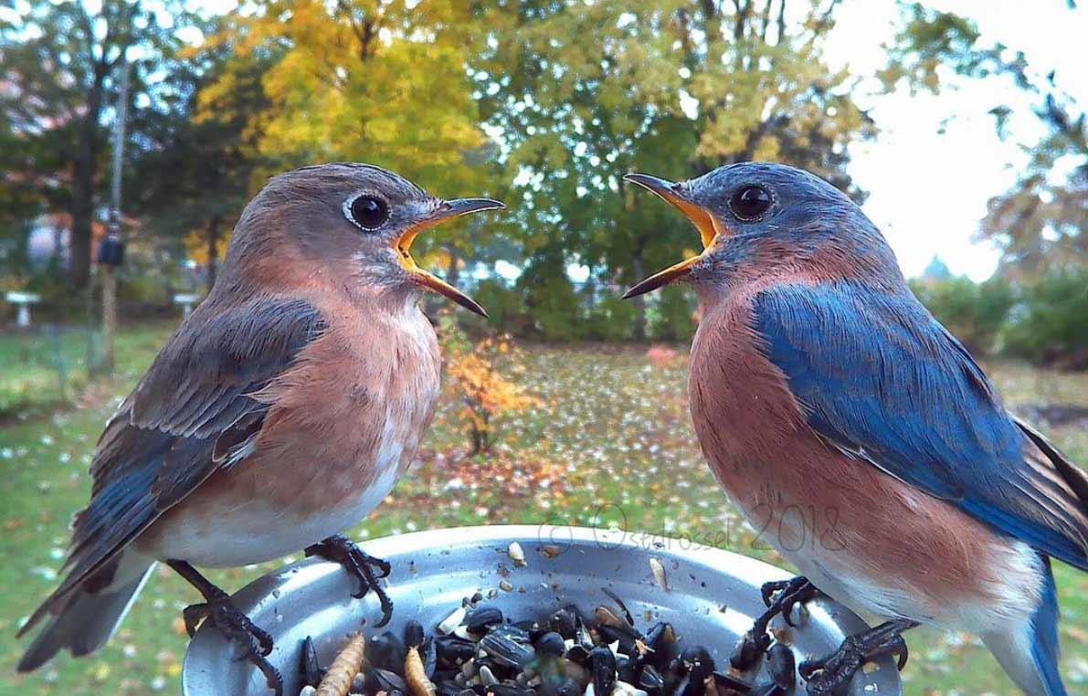 So viele unterschiedliche Vogelarten besuchen einen Futterspender