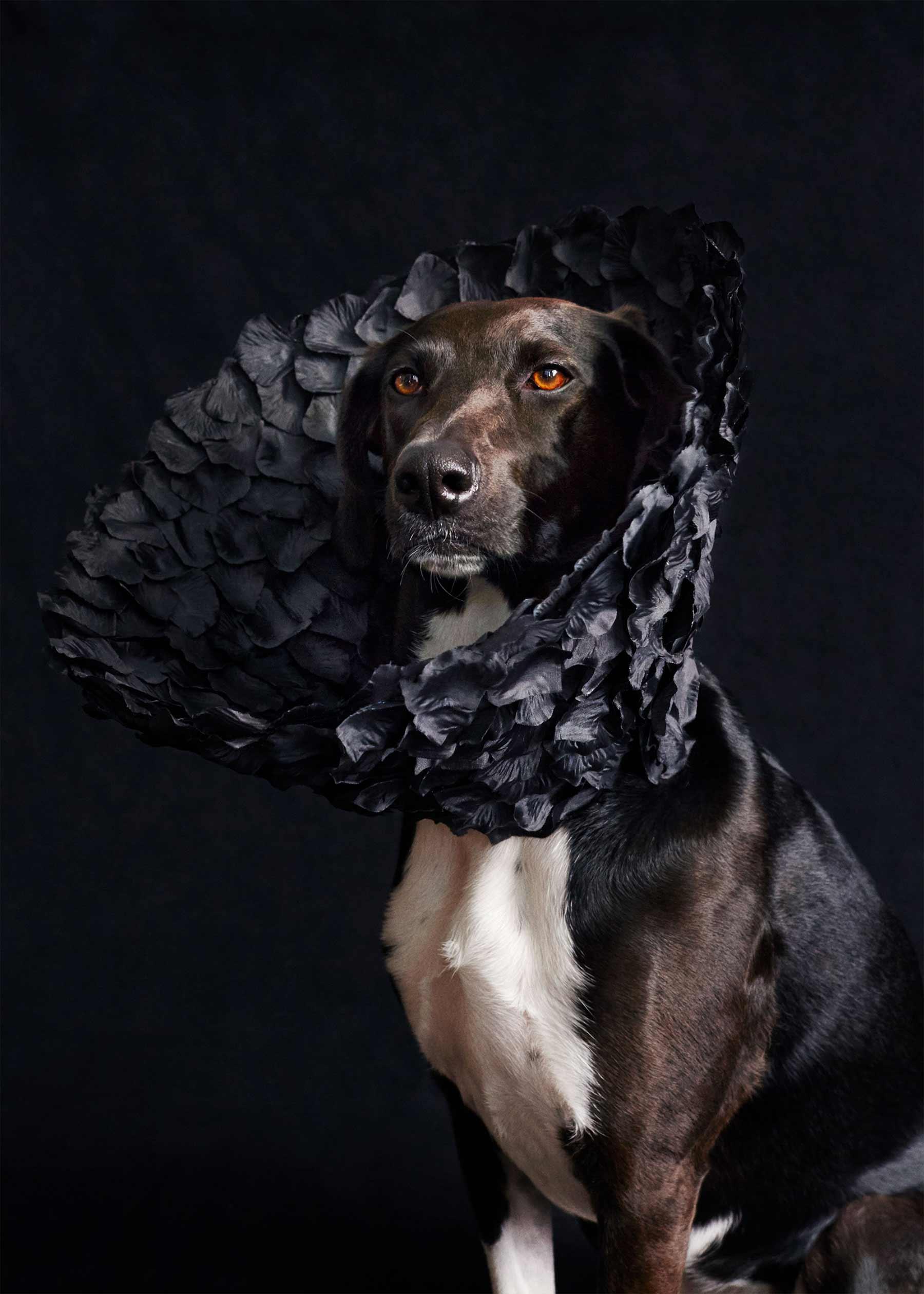 Ausgefallene Schutzkragen für Hunde cone-of-shame-winnie-au-Marie-yan-morvan_02