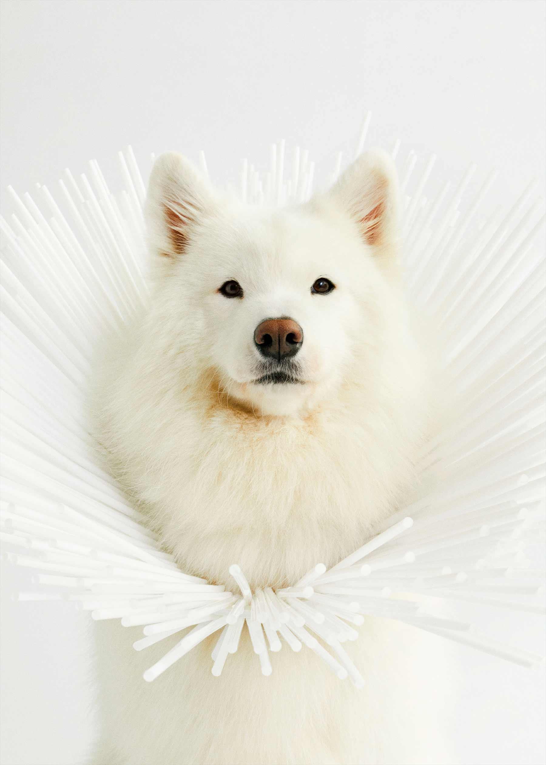 Ausgefallene Schutzkragen für Hunde cone-of-shame-winnie-au-Marie-yan-morvan_04