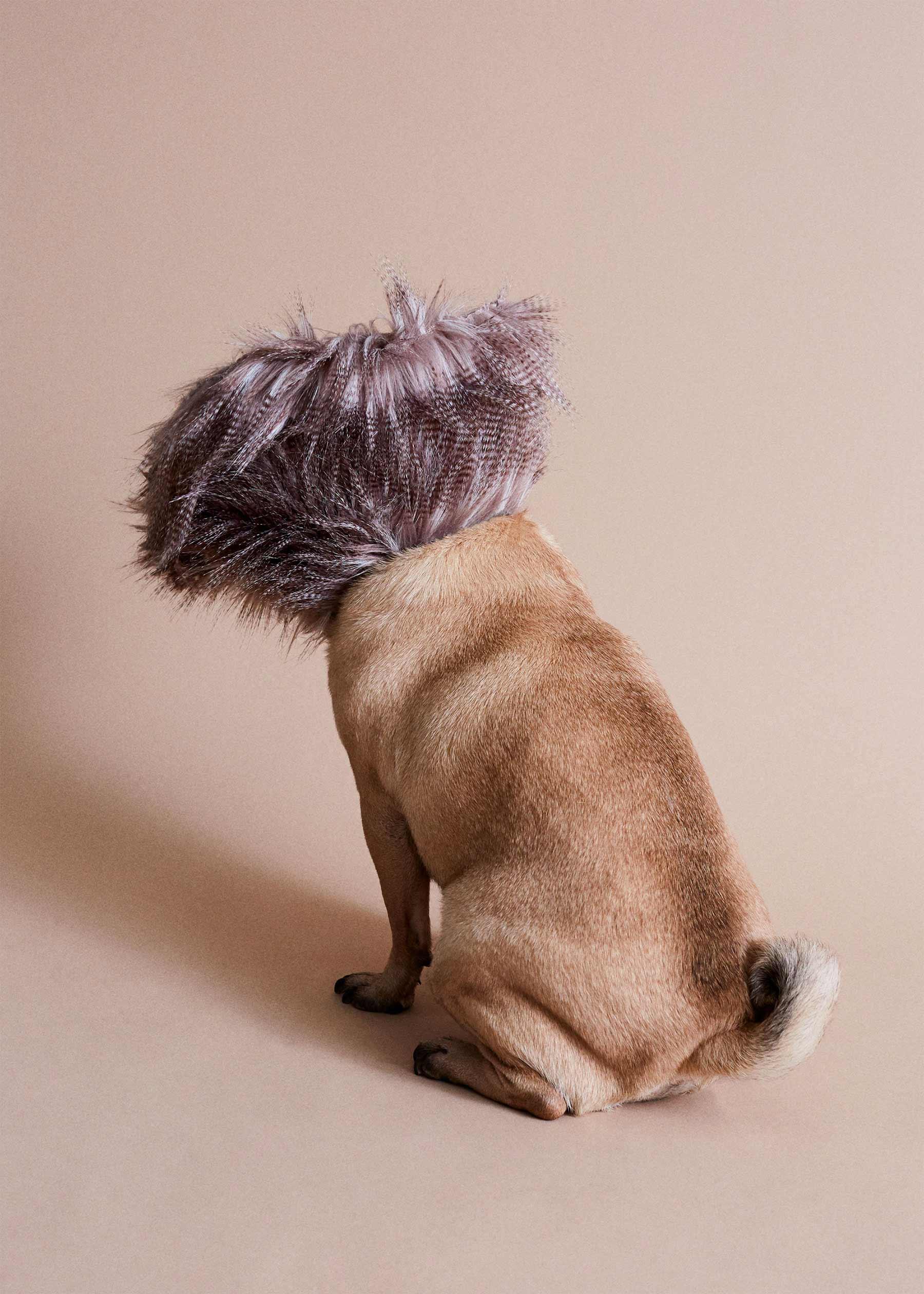 Ausgefallene Schutzkragen für Hunde cone-of-shame-winnie-au-Marie-yan-morvan_05