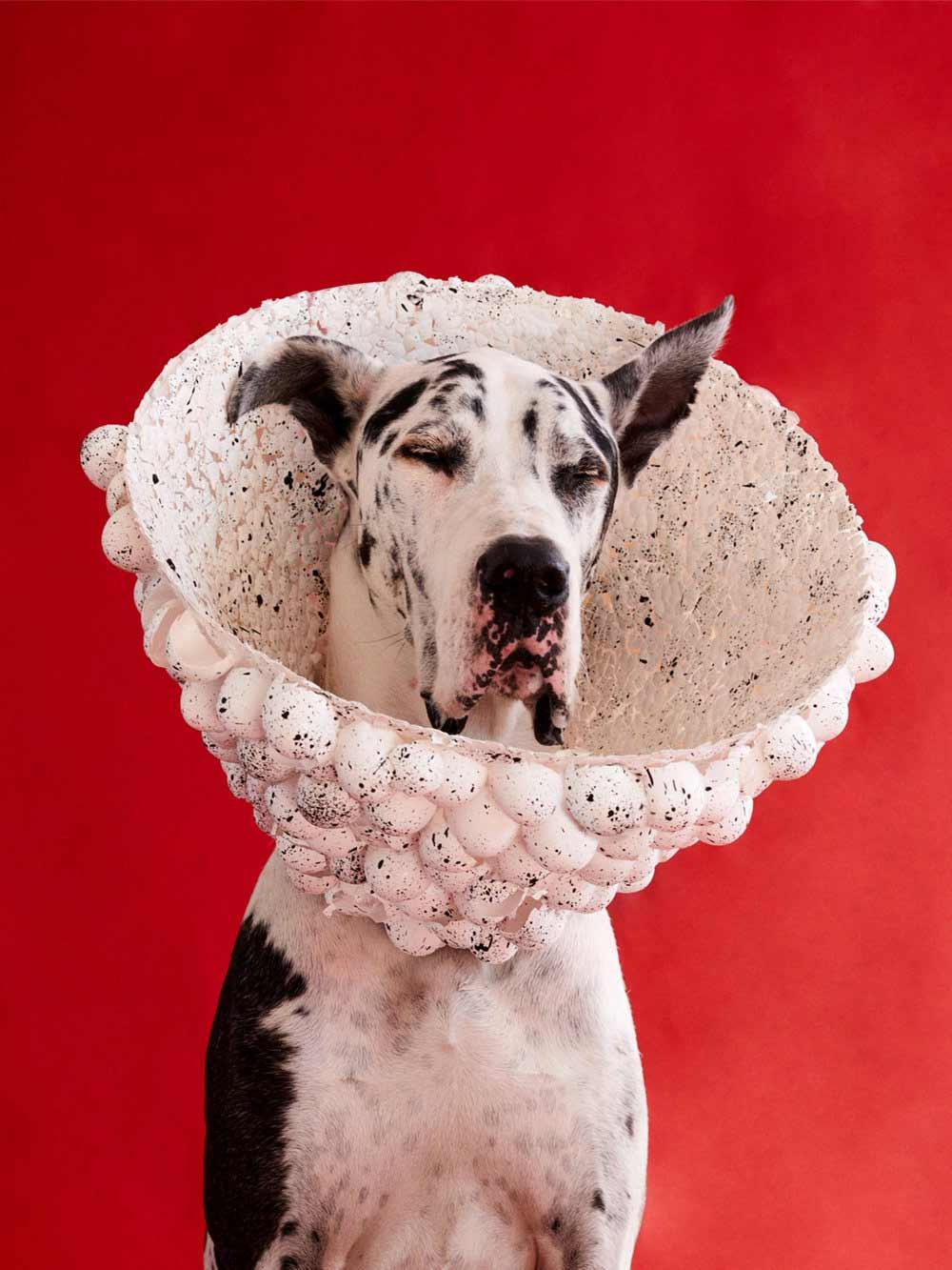 Ausgefallene Schutzkragen für Hunde cone-of-shame-winnie-au-Marie-yan-morvan_07
