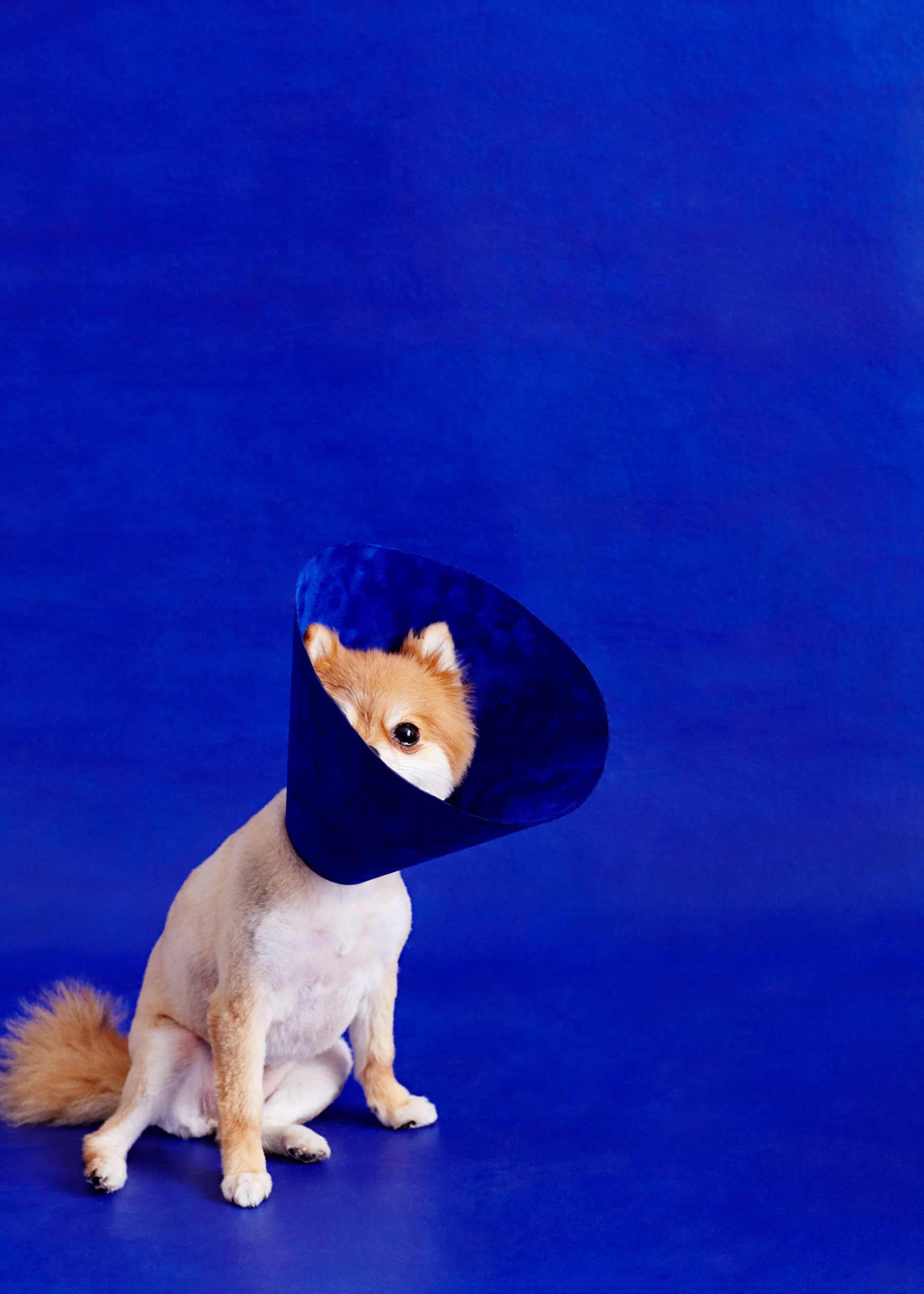 Ausgefallene Schutzkragen für Hunde cone-of-shame-winnie-au-Marie-yan-morvan_09