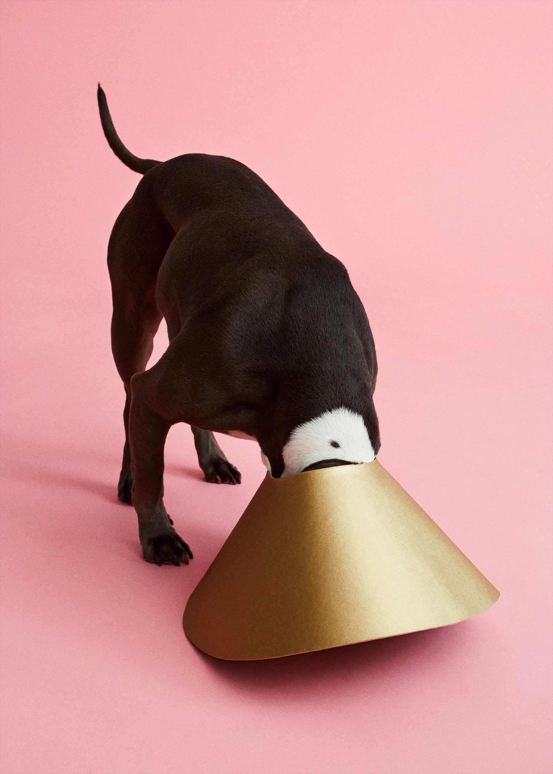 Ausgefallene Schutzkragen für Hunde cone-of-shame-winnie-au-Marie-yan-morvan_10