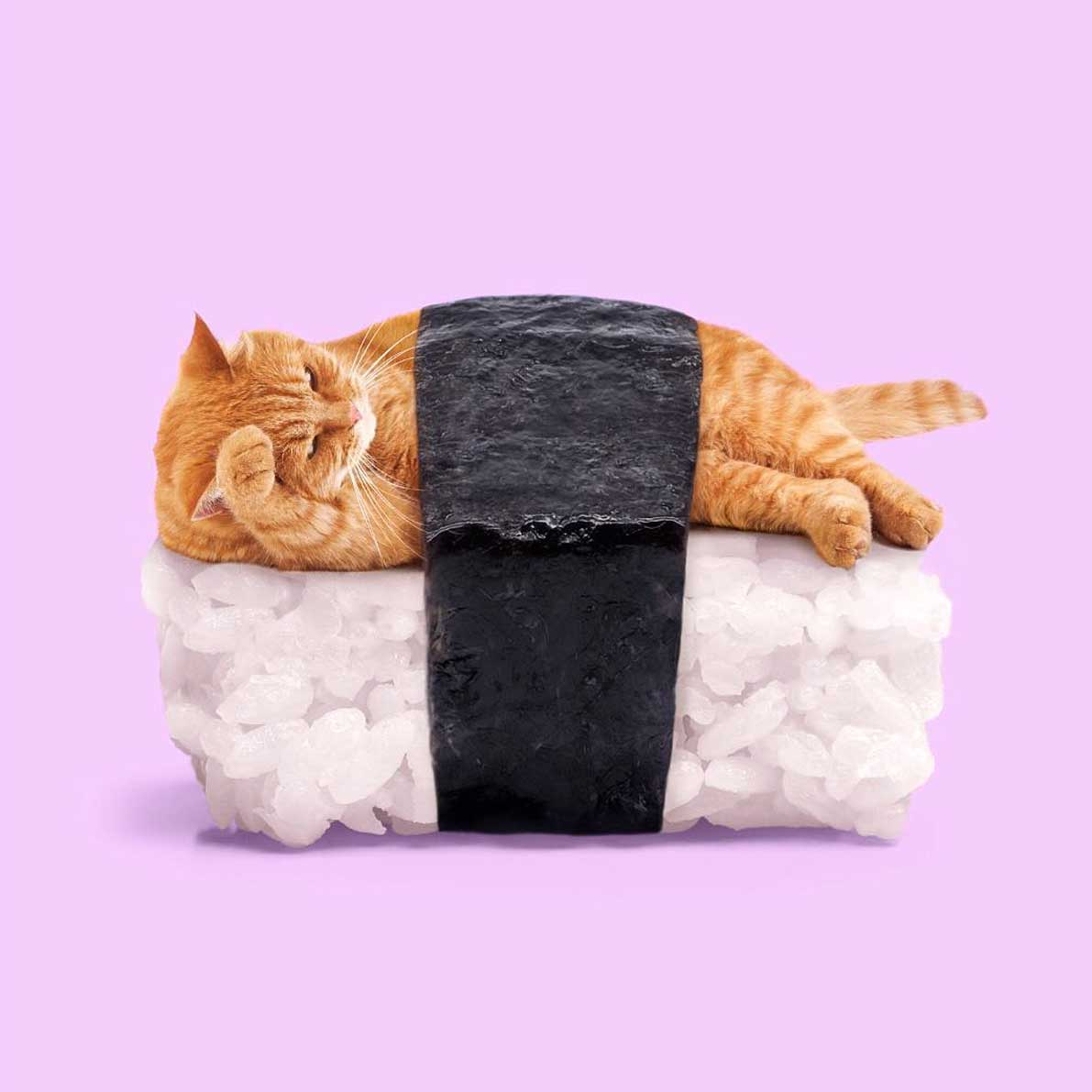 Katzen-Sushi, Pizza-Bikini und Schokolinsen-Schreibmaschine Paul-Fuentes-2019_12