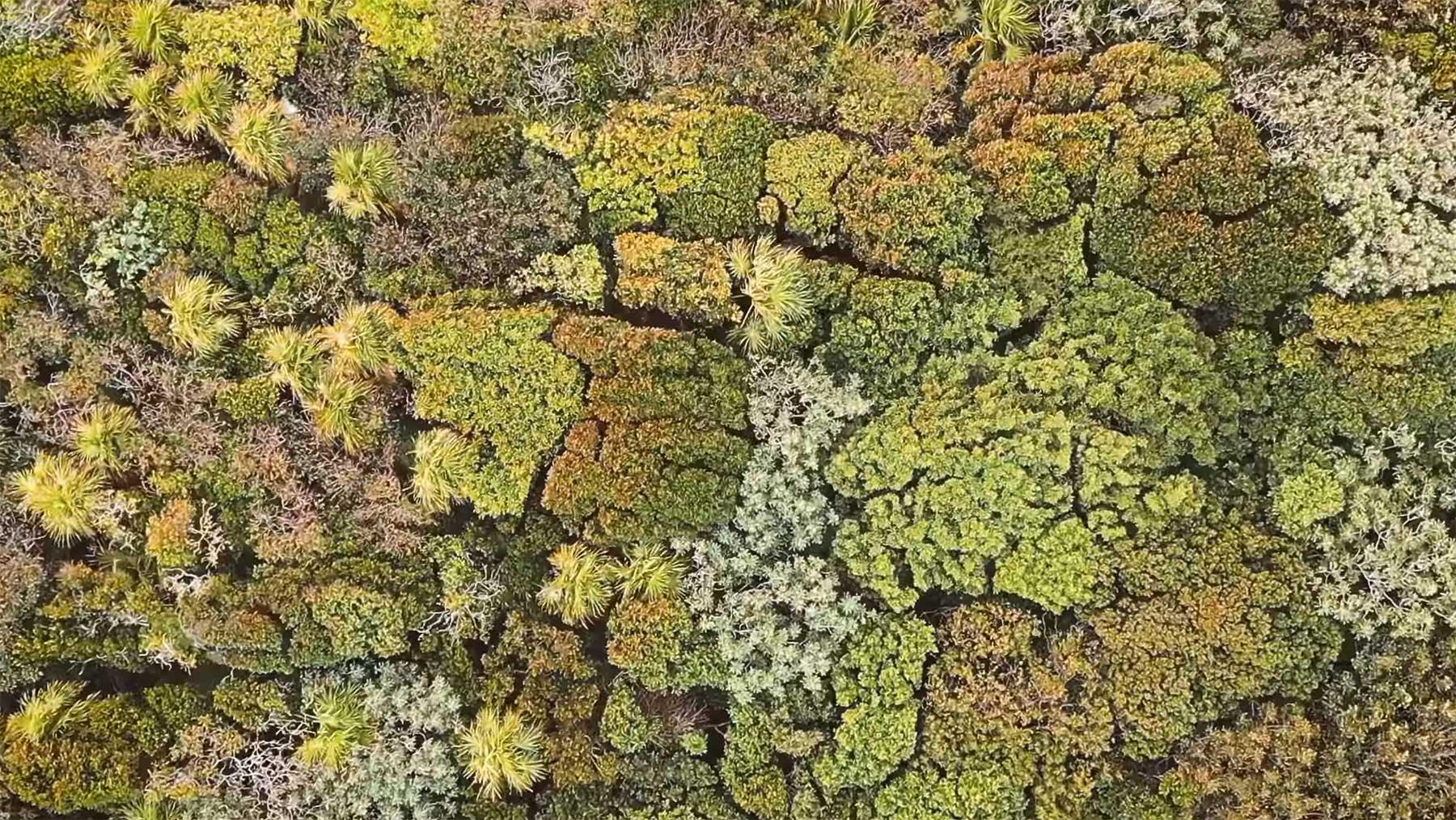 Vom Winde bewegtes Baumkronen-Meer von Oben forest-therapy-video